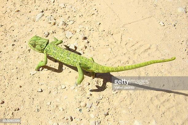 wildlife - squamata stock photos and pictures