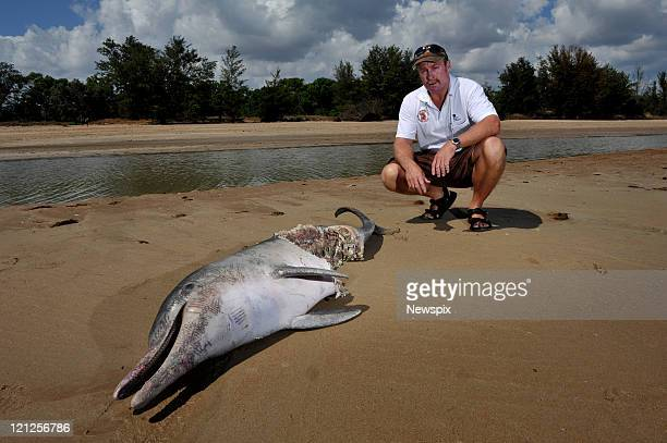 Wildlife Ranger, Ray Chatto looks at the remains of an Indo-Pacific humpback dolphin that washed up on the beach at Lee Point on August 8, 2011 in...