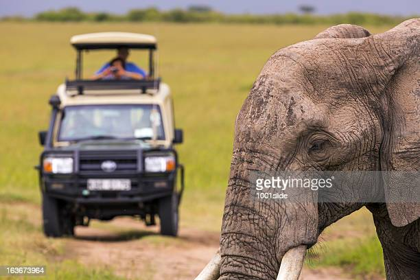 Wildlife viewing in Africa on Masai Mara Safari Tour