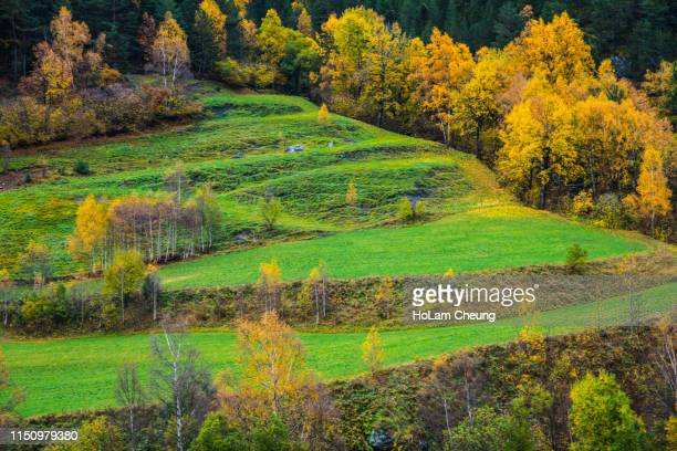 wildtree - andorra stock pictures, royalty-free photos & images