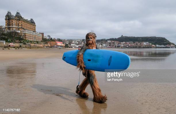 Will Hyde from Darlington wears the costume of the Chewbacca character from the movie Star Wars as he carries a surf board across the beach after...