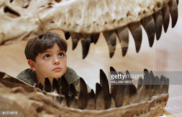 Will Murphy inspects the teeth of a Theropod dinosaur at an exhibition titled 'Hatching the Past Dinosaur Eggs Babies' featuring more than 15...
