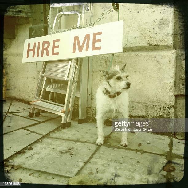 will work for dog treats. - s0ulsurfing 個照片及圖片檔