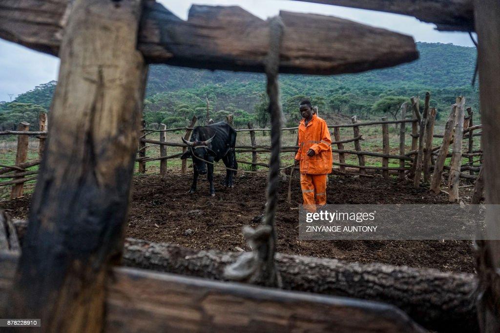 ZIMBABWE-POLITICS-AGRICULTURE : News Photo