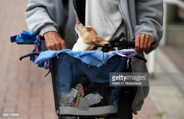William Nicol who has been homeless for over a year keeps his chihuahua Tinkerbell in her bike basket while they await veterinary during an onsite...