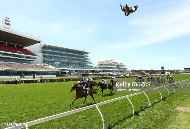 William Pike riding Outrageous wins race 6, the Grinders Coffee Roasters Trophy during 2020 Lexus Melbourne Cup Day at Flemington Racecourse on...