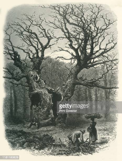 William the Conqueror's Oak' circa 1870 Pedunculate oak in Windsor Great Park From Picturesque Europe The British Isles Vol I [Cassell Petter Galpin...