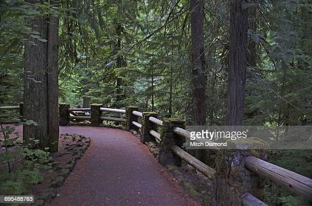 Williamette National Park Trails