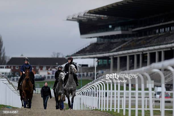 Willie Mullins string make their way to the gallops at Cheltenham racecourse on March 10 2013 in Cheltenham England