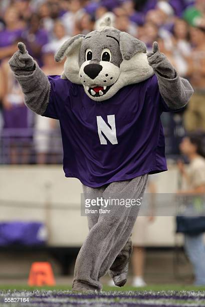 Willie the wildcat, mascot of the Northwestern Wildcats is seen on the field against the Penn State Nittany Lions September 24, 2005 at Ryan Field in...