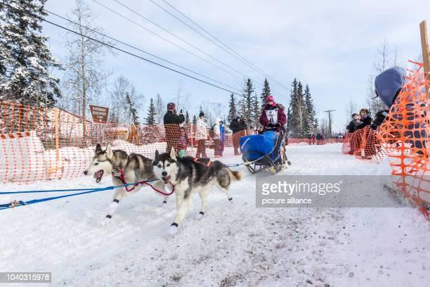 Willow Alaska musher Lisbet Norris and her Siberian Huskies at the start of the 2015 Iditarod Sled Dog Race in Fairbanks Alaska 09 March 2015 Photo...