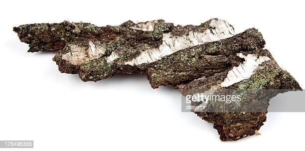willow casca - salgueiro - fotografias e filmes do acervo