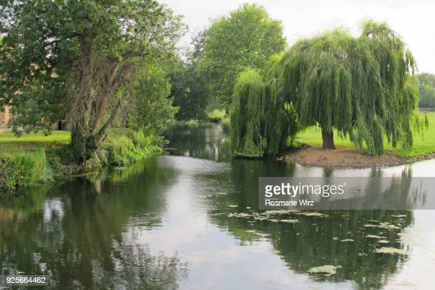 Willow reflecting in River Welland