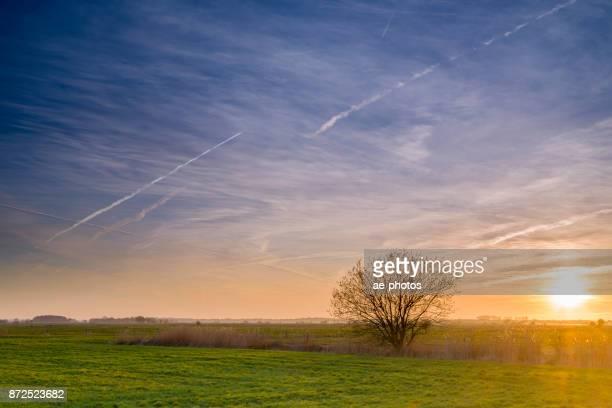柳の木と夕日で牧草地に一般的なリード - 三月 ストックフォトと画像
