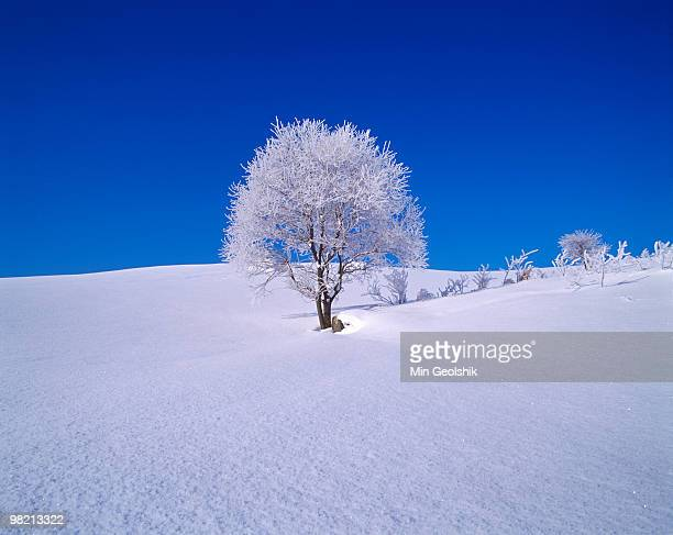 Willow Tree in snow covered field.