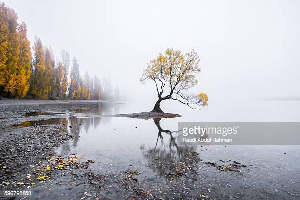 willow tree of lake wanaka, new zealand - lago wanaka - fotografias e filmes do acervo