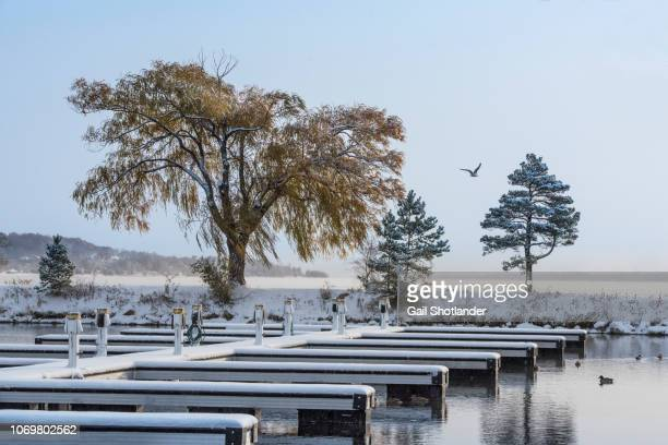 Willow Tree, the Marina, and the First Snow