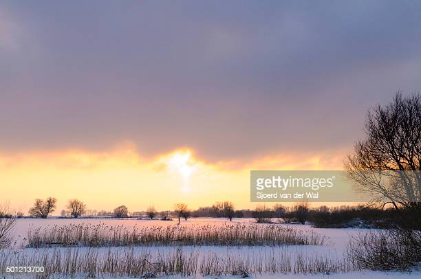 "willow trees in a snow covered winter landscape - ""sjoerd van der wal"" stock-fotos und bilder"