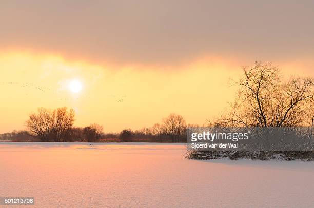 Willow trees in a snow covered winter landscape