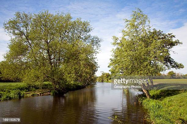 Willow trees line meandering River Stour Dedham Vale Essex Suffolk border England