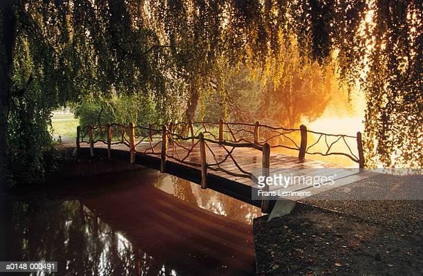 Willow Trees Over Footbridge