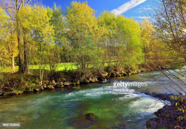 Willows (Salix sp.) with yellow autumnal foliage, on the banks of the Leitzach river, Leitzachtal valley near Fischbachau, alpine upland, Bavaria, Germany