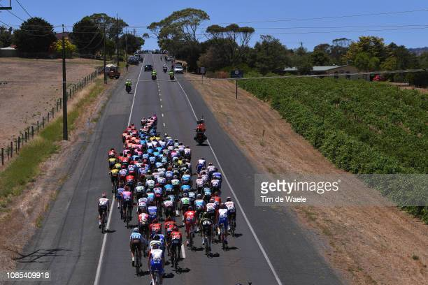 Willunga Hill / Peloton / Landscape / Vineyards / during the 21st Santos Tour Down Under 2019, Stage 6 a 151,5km stage from McLaren Vale to Willunga...