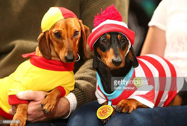 Willy dressed as a surf livesaver and Mia dressed as Where's Waldo pose during the Hophaus Southgate Inaugural Best Dressed Dachshund on September 19...