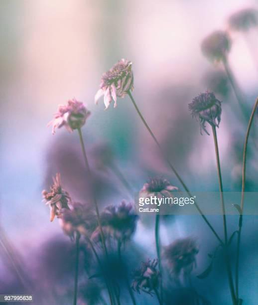 Wilted flowers in winter sunlight