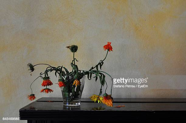 Wilted Flowers On Table Against Wall