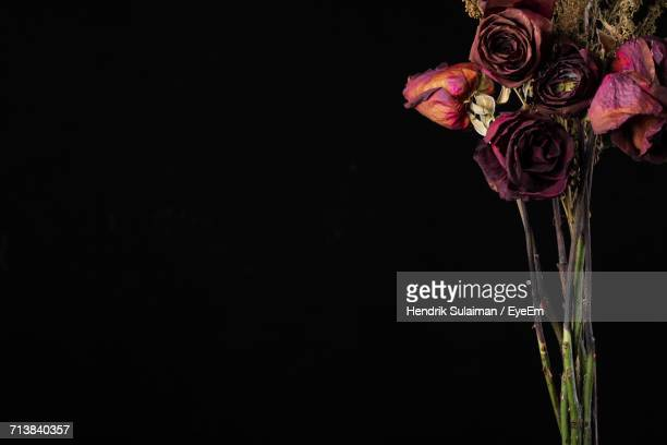 Wilted Roses Bouquet Against Black Background