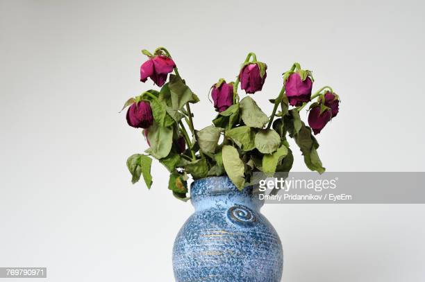 Wilted Roses In Vase Against Wall