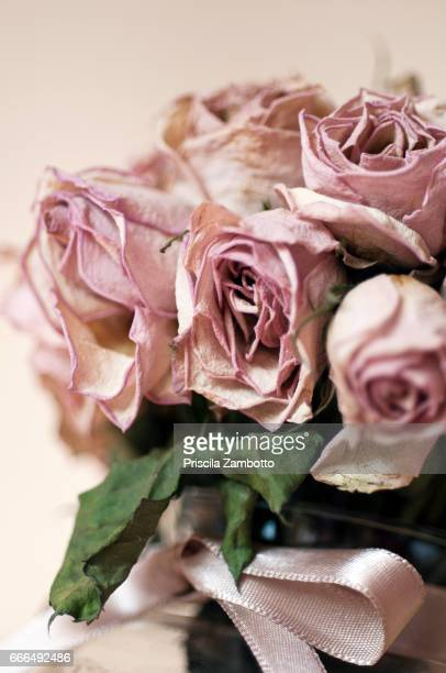 wilted roses - rose colored stock pictures, royalty-free photos & images