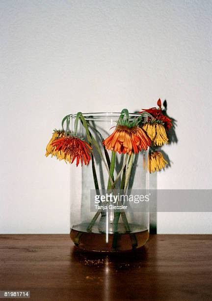 Wilting flowers in a vase