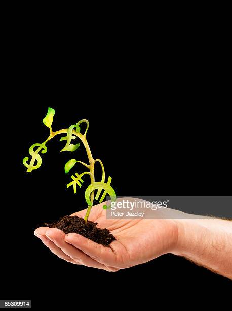 Wilting money tree.