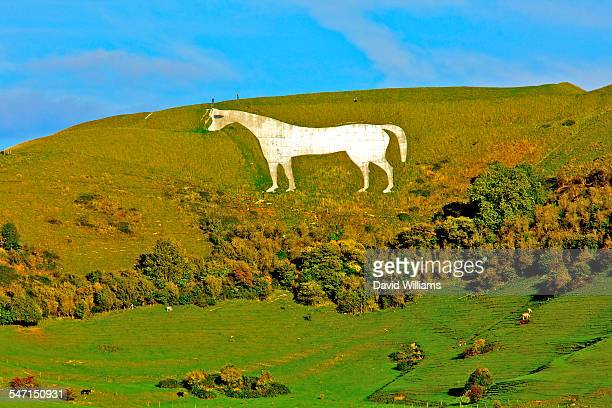 wiltshire environment - white horse stock pictures, royalty-free photos & images