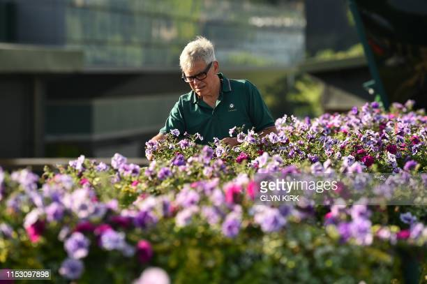 Wimbledon gardener Christopher McCarron puts the finishing touches to a display at The All England Tennis Club in Wimbledon southwest London on July...