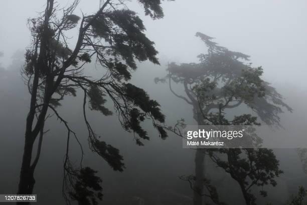 wind and fog - sintra fotografías e imágenes de stock