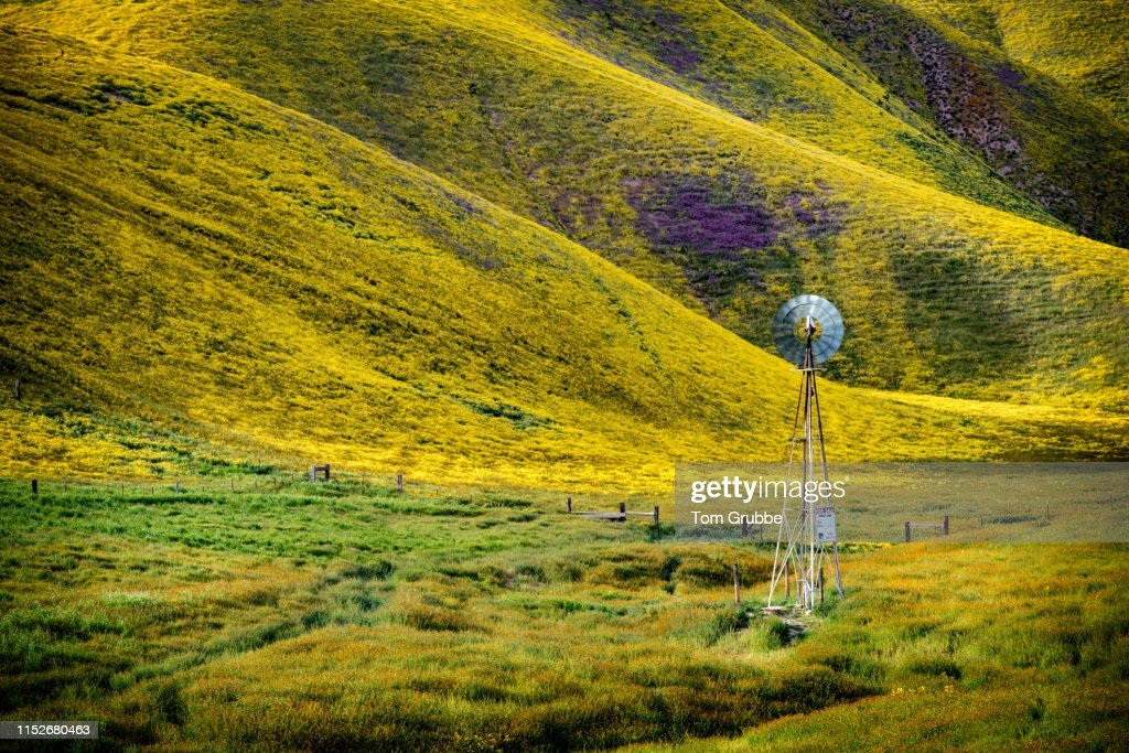 Wind and Plain : Stock Photo