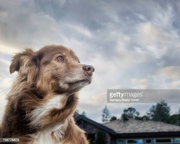 wind blowing fur of dog near house - low angle view stock pictures, royalty-free photos & images