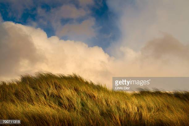 wind blowing tall green grass under clouds - haut photos et images de collection