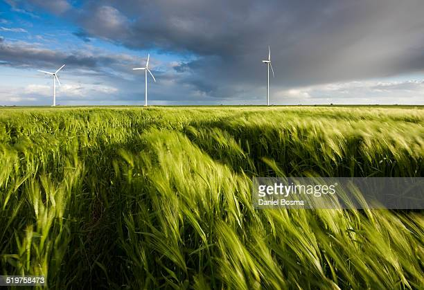 wind blowing through field of grain - wind stockfoto's en -beelden