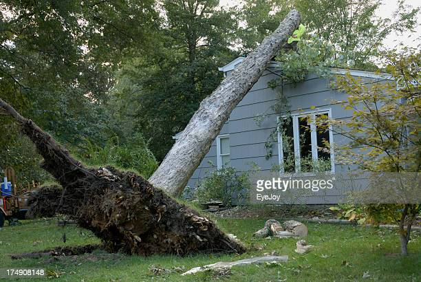 wind damage after storm - gale stock photos and pictures
