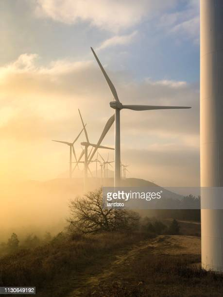 vindkraftpark vid solnedgången. - vindsnurra jordbruksbyggnad bildbanksfoton och bilder