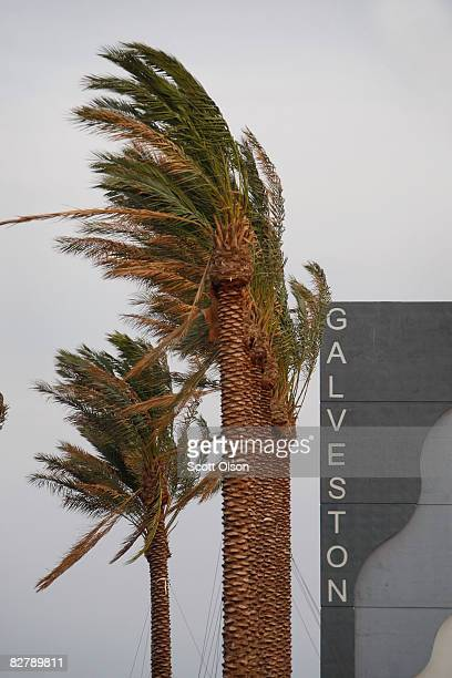 Wind from Hurricane Ike whips past palm trees September 12 2008 in Galveston Texas The eye of the hurricane is expected to make landfall along the...