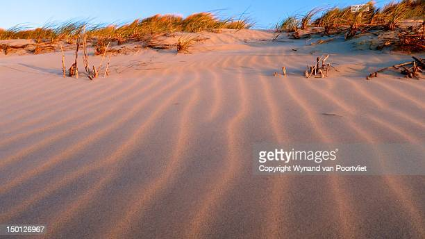 Wind grass on sand