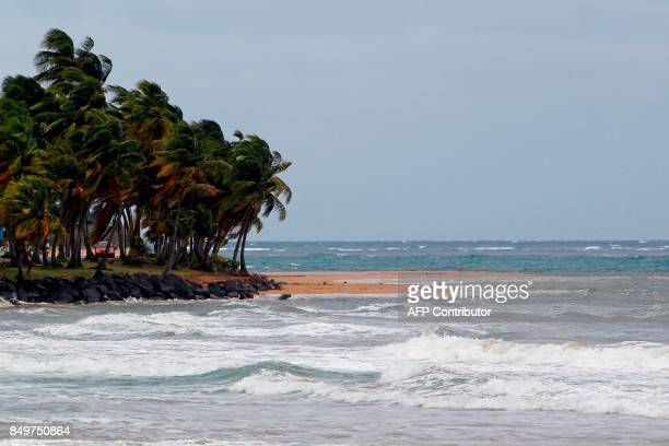 Wind gusts hit palm trees as Hurricane Maria approaches the island of Luquillo in Puerto Rico Tuesday Sept 18 2017 Maria headed towards the Virgin...