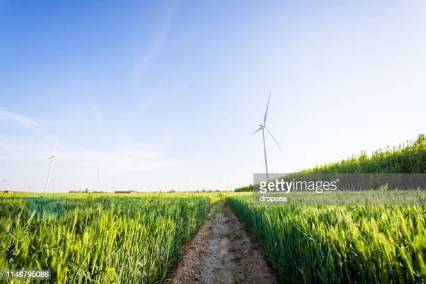 wind power windmill in wheat field - hebei province stock pictures, royalty-free photos & images