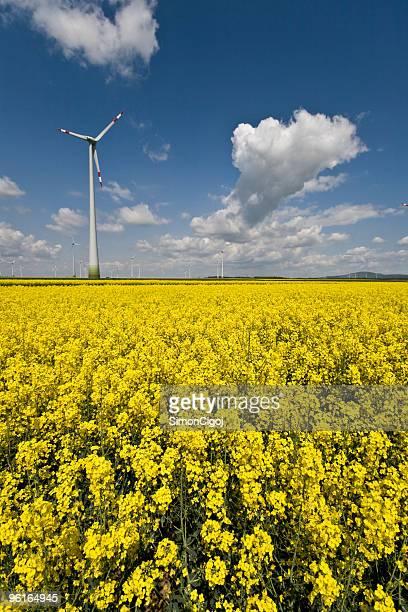 Wind turbine behind Oilseed Rape field