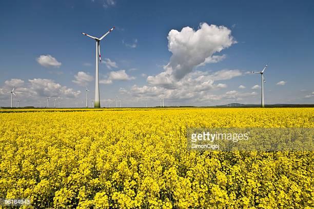 Wind turbine farm and rapeseed field